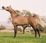 *LECH as a yearling